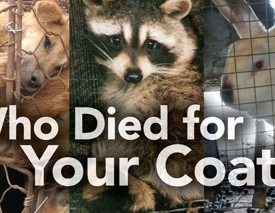 fur for animals